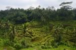 Reisterrassen von Tegallalang, Bali