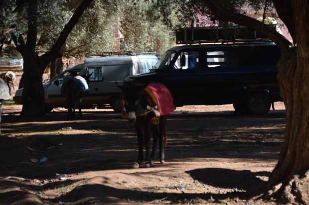 Überall warteten Esel geduldig auf Touristen oder darauf, ihren Job zu machen.