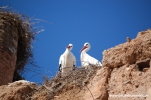 Die Störche vom El-Badi-Palast