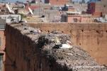 Störche auf den Mauern des El-Badi-Palasts