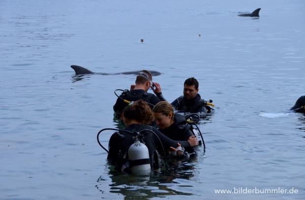 Im Dolphin Reef kannst du mit Delfinen tauchen...